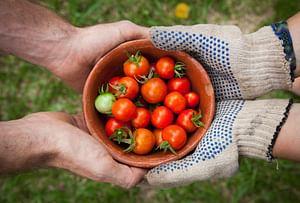 Versatile gardener at your service