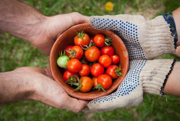 Versatile gardener at your service photo 0